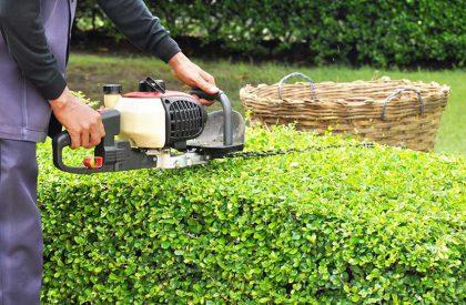 Opieka nad ogrodami przycinanie żywopłotu