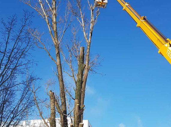 wycinka drzew warszawa
